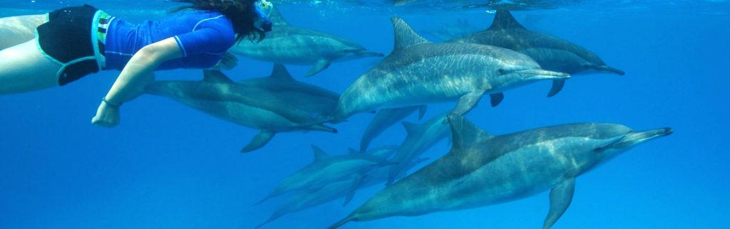 Dolphin Warrior Mauritius